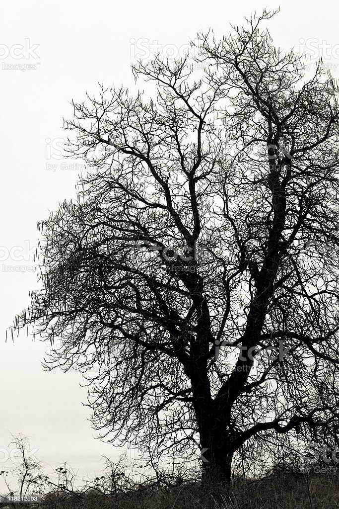 Sepia Toned Tree in Silhouette stock photo