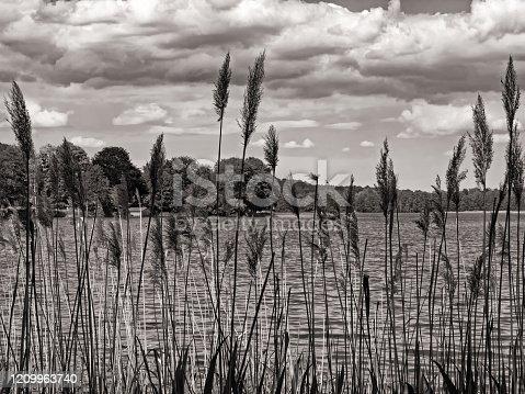 Sepia tones image of lake