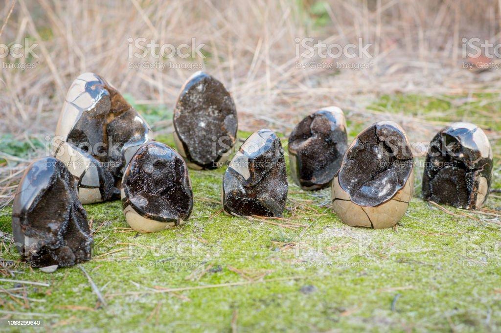 8 Septarian Steinen, auch genannt dragoneggs – Foto