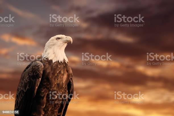 September 2012 portrait of a proud american bald eagle in front of a picture id946624158?b=1&k=6&m=946624158&s=612x612&h=xvvwt ohviw4uqhklzzzbwf j ur6  zmwaeqzzorls=