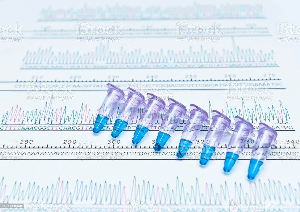 PCR DNA sequence analysis by chromatogram peaks stock photo