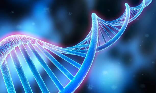 secuencia de adn, estructura del código de adn - medical 3d illustration - adn fotografías e imágenes de stock