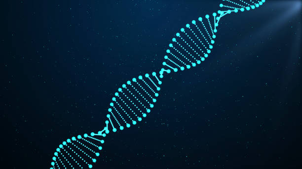 DNA sequence, DNA code structure with glow DNA, Adenine, Cytosine, Guanine, Laboratory nucleotide stock pictures, royalty-free photos & images