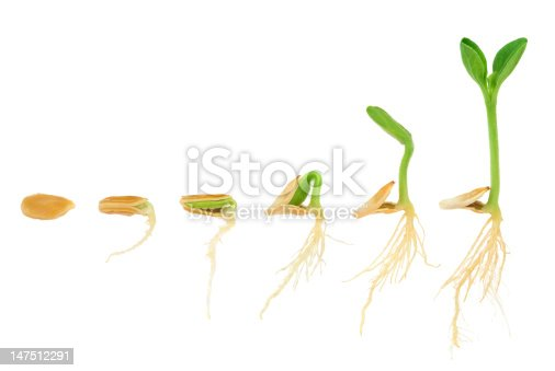 istock Sequence of pumpkin plant growing isolated, evolution concept 147512291