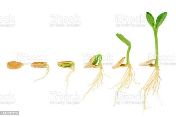 Sequence of pumpkin plant growing isolated evolution concept picture id147512291?b=1&k=6&m=147512291&s=612x612&h=xo7gzesp8k1m34sfo7cfrilpstwtcvtt41fk6x6z11m=