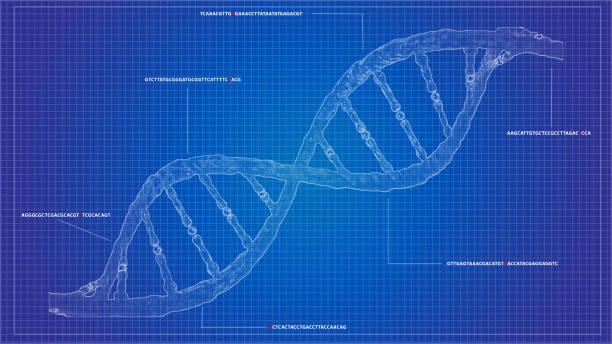 DNA sequencing blueprint RNA sequencing DNA computational models - foto stock