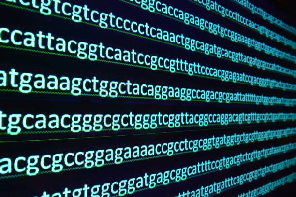 Sequencing of the genome in the laboratory. stock photo