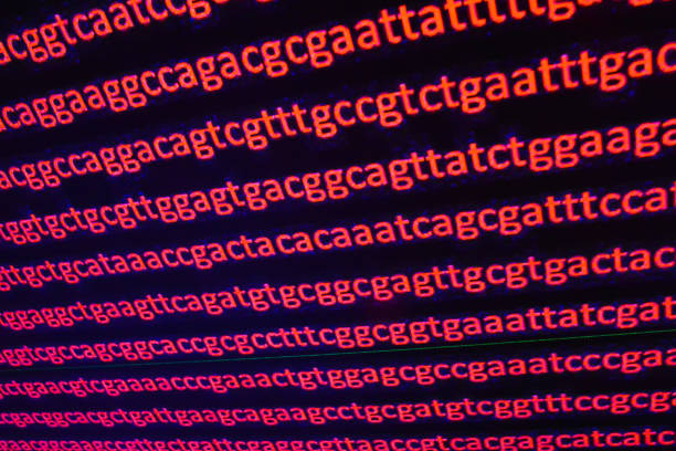 DNA sequencing. stock photo