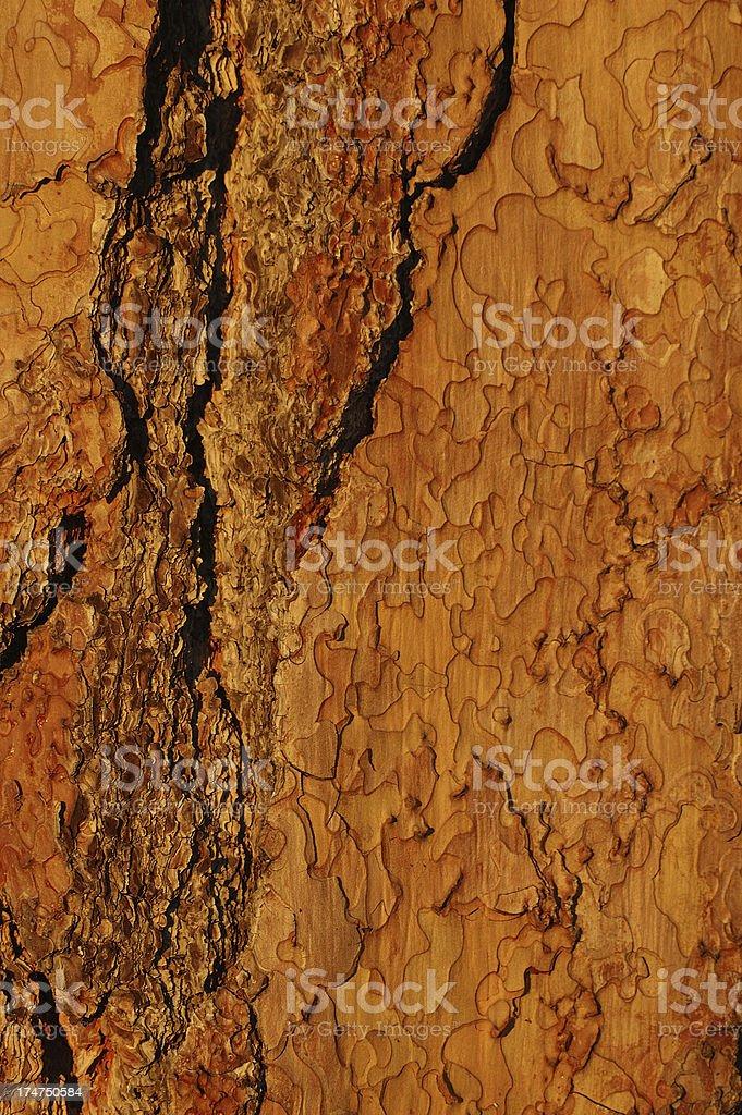 Sequoia cortex royalty-free stock photo
