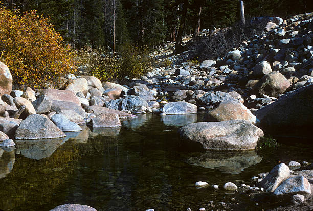 Sequoia mountain stream, circa 1976 Mountain stream winding through the Sequoia National Park. hearkencreative stock pictures, royalty-free photos & images