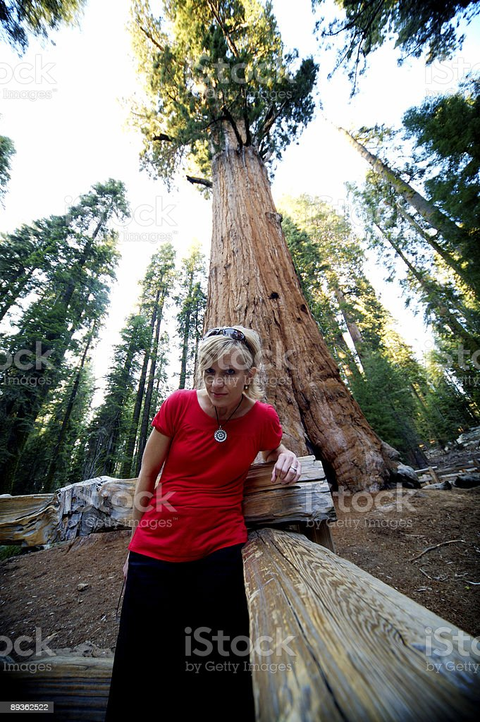 sequoia national forest portraits royaltyfri bildbanksbilder