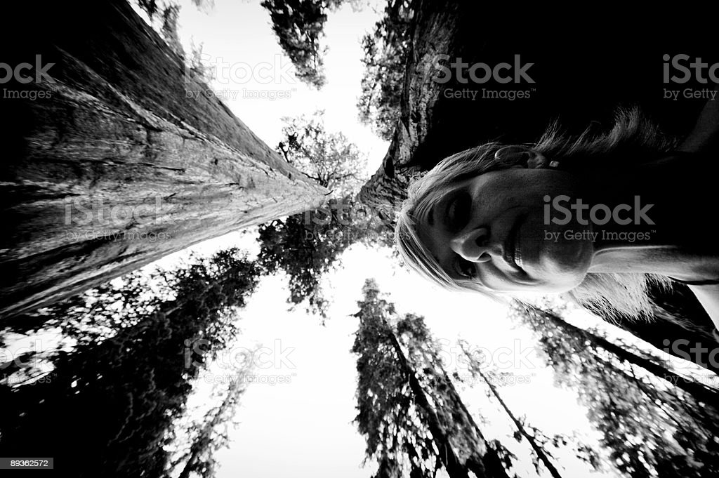 sequoia national forest portraits royalty-free stock photo