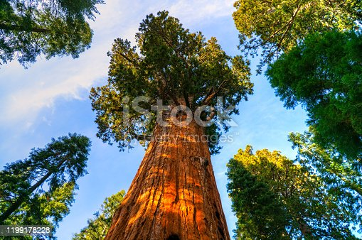 Natural valley of the Sequoia National Park at sunset, California, USA.