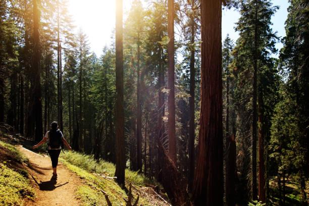 Sequoia National park, California Sequoia National park, California national forest stock pictures, royalty-free photos & images