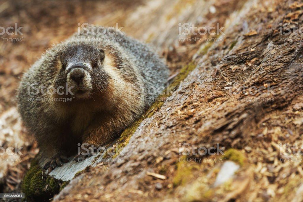 Sequoia National park, California stock photo