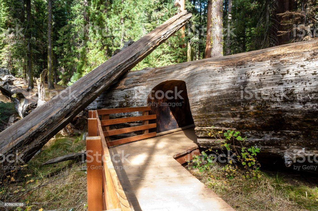 Sequoia National Park, California-USA stock photo