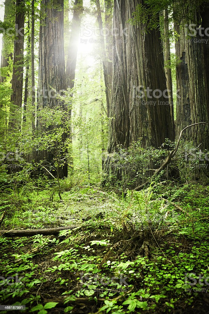 Sequoia National Park royalty-free stock photo