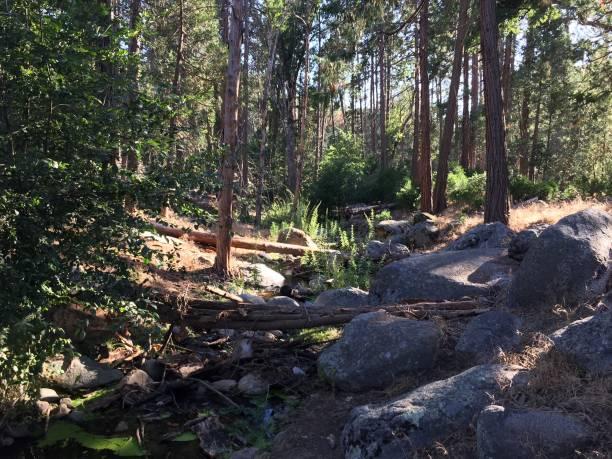 Sequoia Series 3 - Creek stock photo