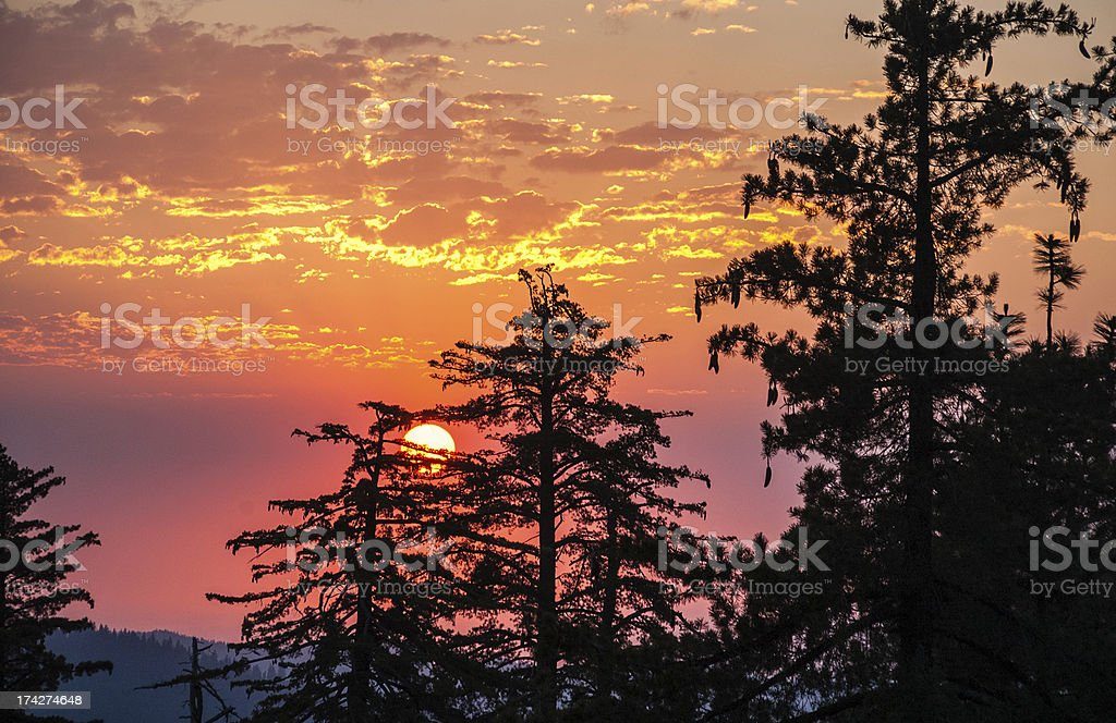 Sequoia silhouettes against orange, pink, red, marsala skies, Kings Canyon royalty-free stock photo