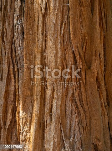 Closeup of a sequoia tree, useful as a background. Small strands of spider web are visible.