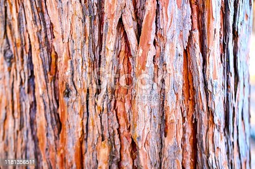 Sequoia tree texture background in Yosemite National Park in California.