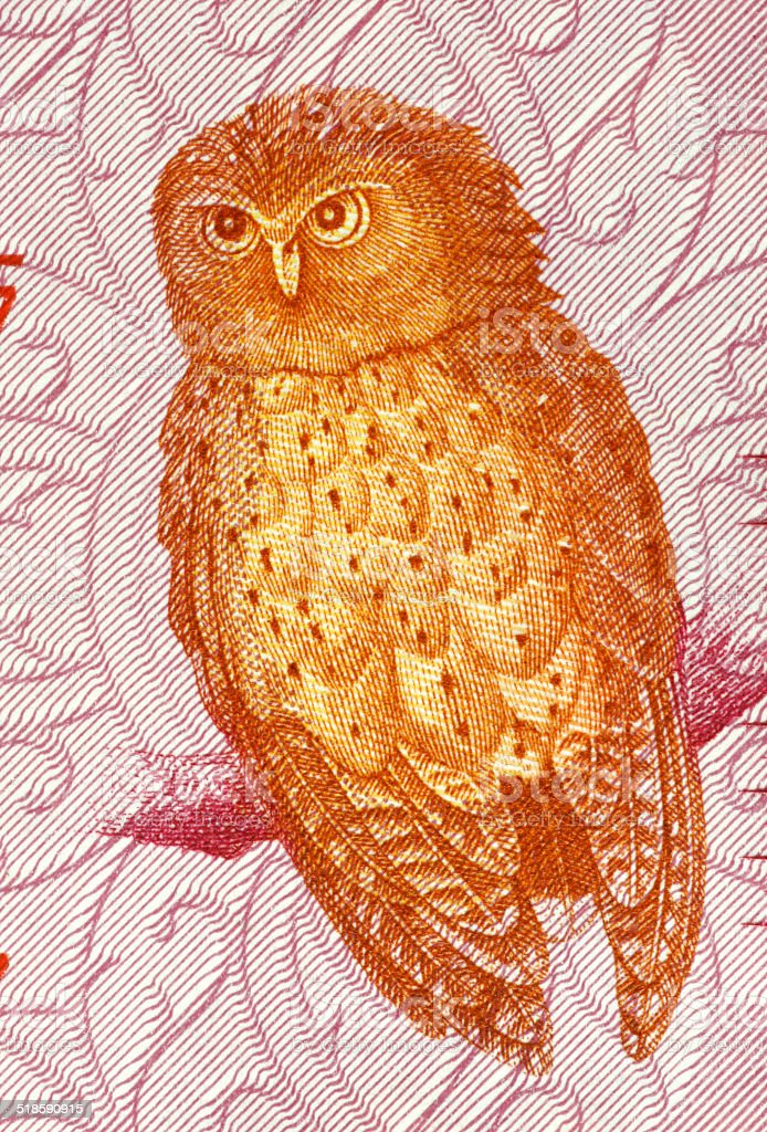 Serendib Scops Owl stock photo