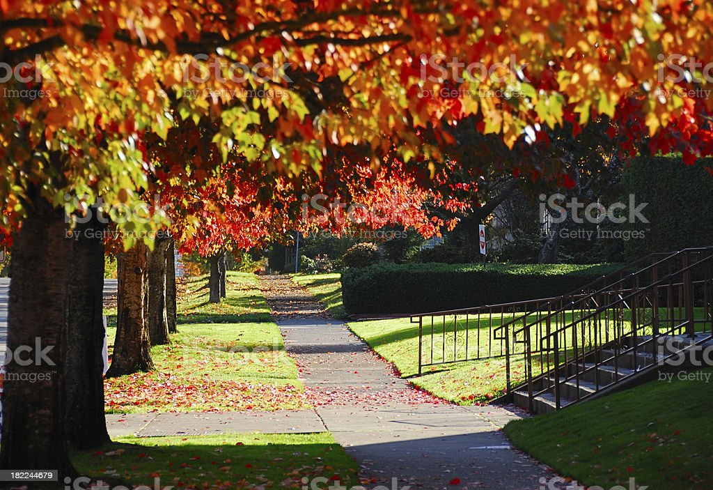 Serene Autumn Path royalty-free stock photo