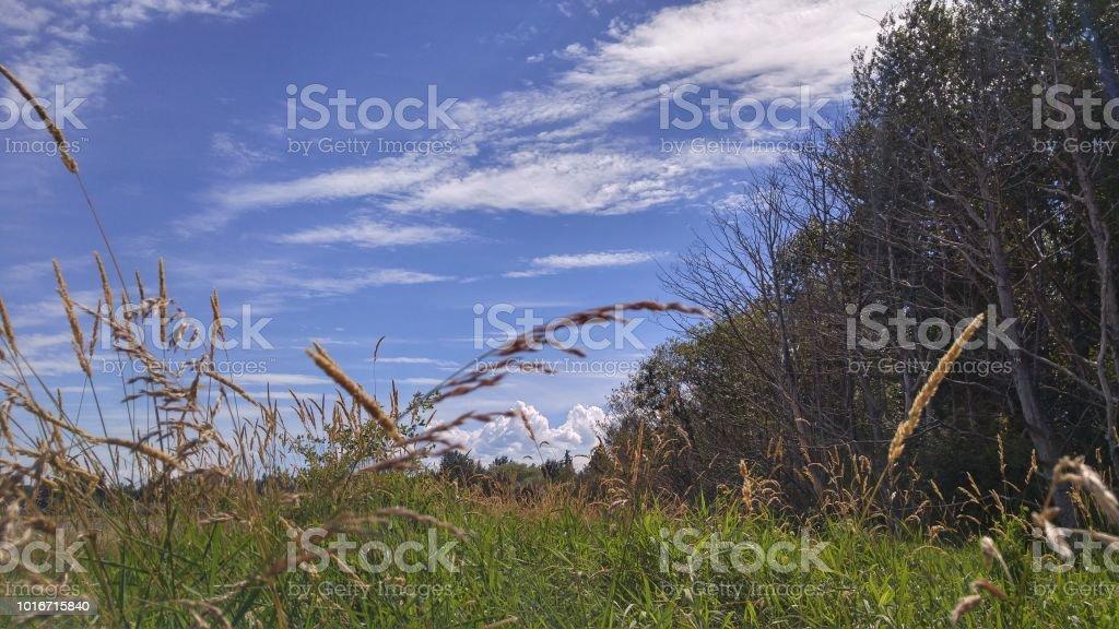 A serene grassy scene in summer stock photo