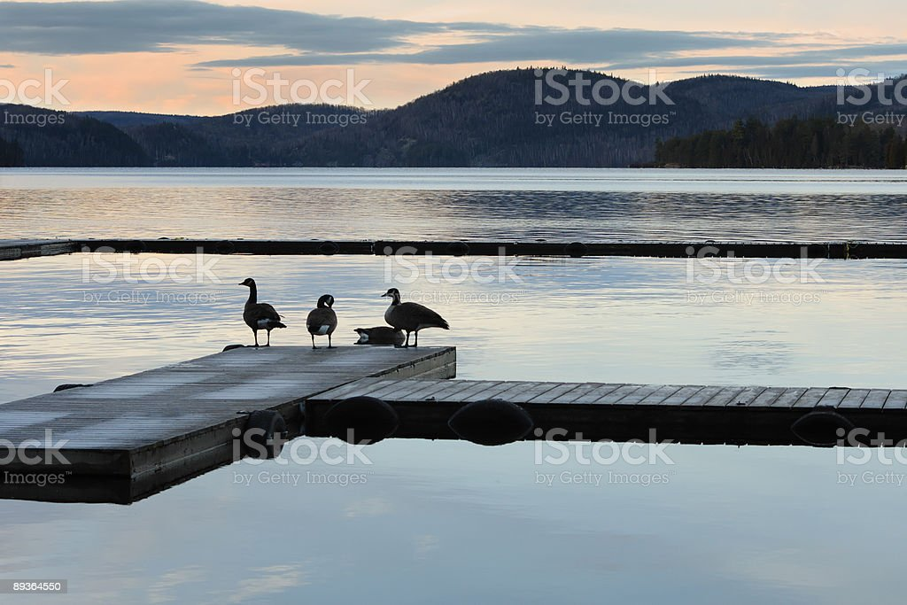 Serene mornings series royalty-free stock photo