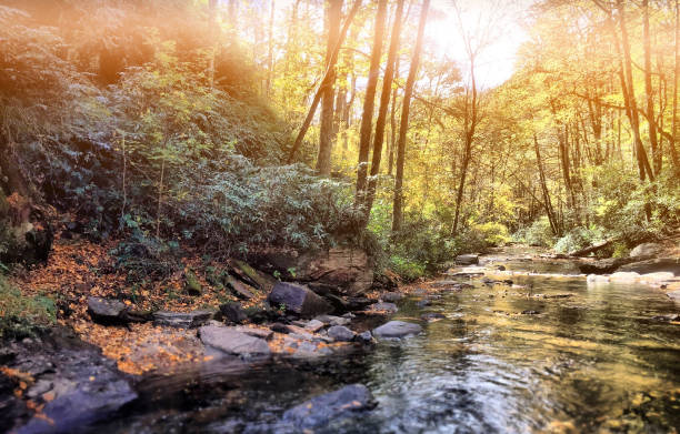 Serene Mountain River A quiet stream, in the North Carolina mountains. appalachian trail stock pictures, royalty-free photos & images