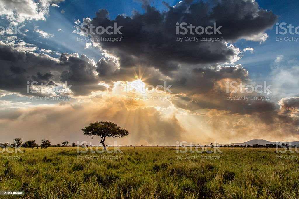 Serengeti Glory stock photo