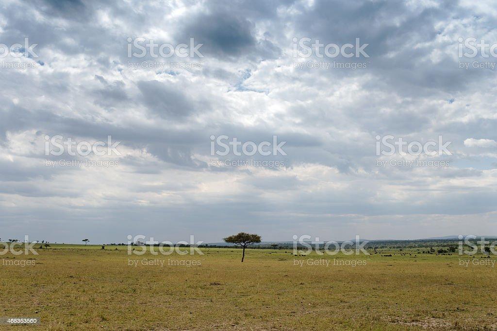 Serengeti National Park, Tanzania royalty-free stock photo