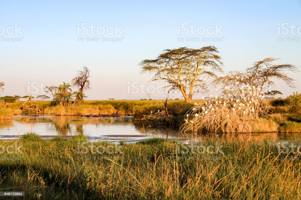 Serengeti National Park, Tanzania stock photo