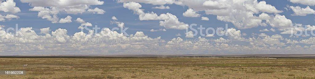 Serengeti Panorama royalty-free stock photo