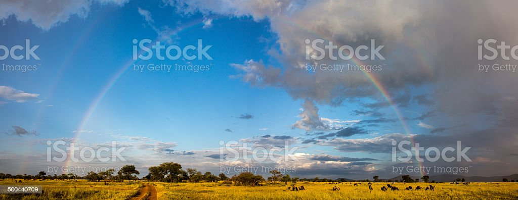 Serengeti Panorama with full rainbow stock photo