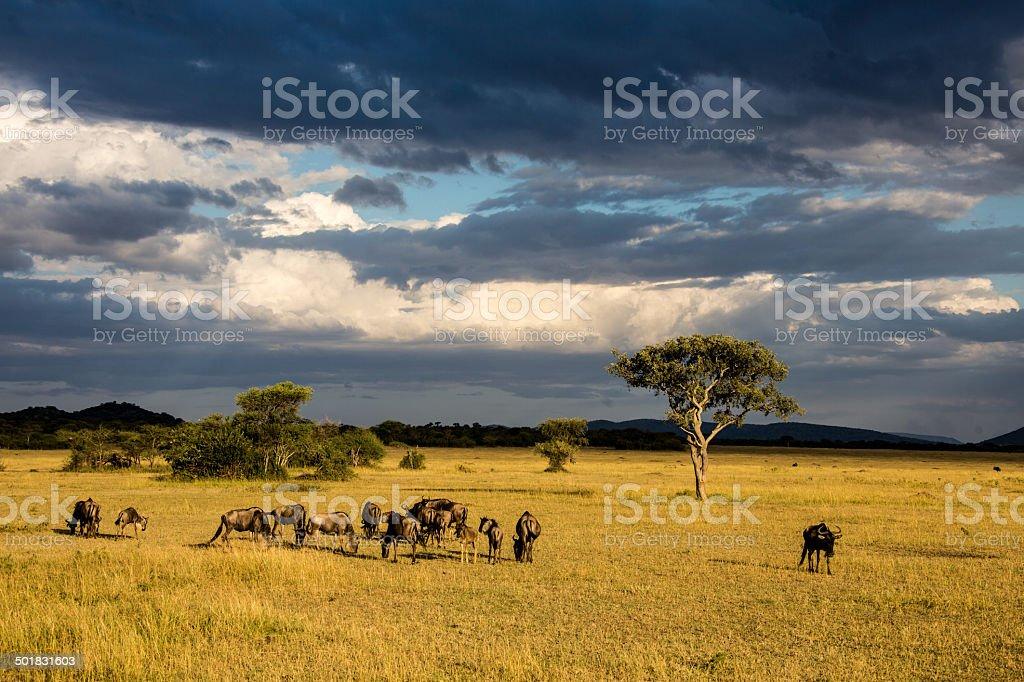 Serengeti plains with dramatic cloudscape stock photo