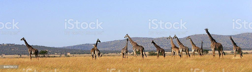 Serengeti malerischen – Foto