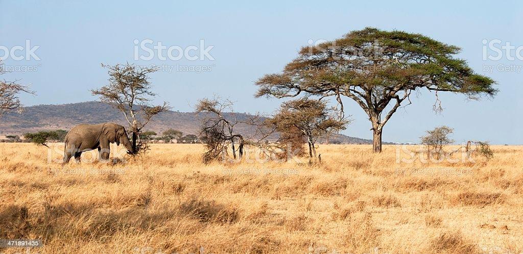 Serengeti Wildlife stock photo