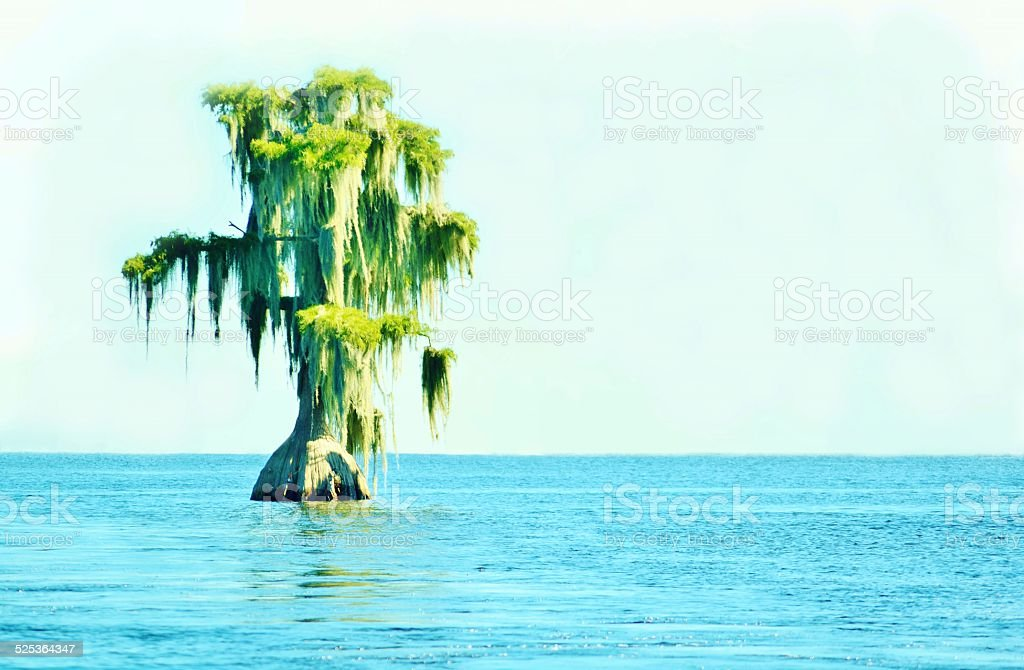 Serenity is Cypress on Lake stock photo