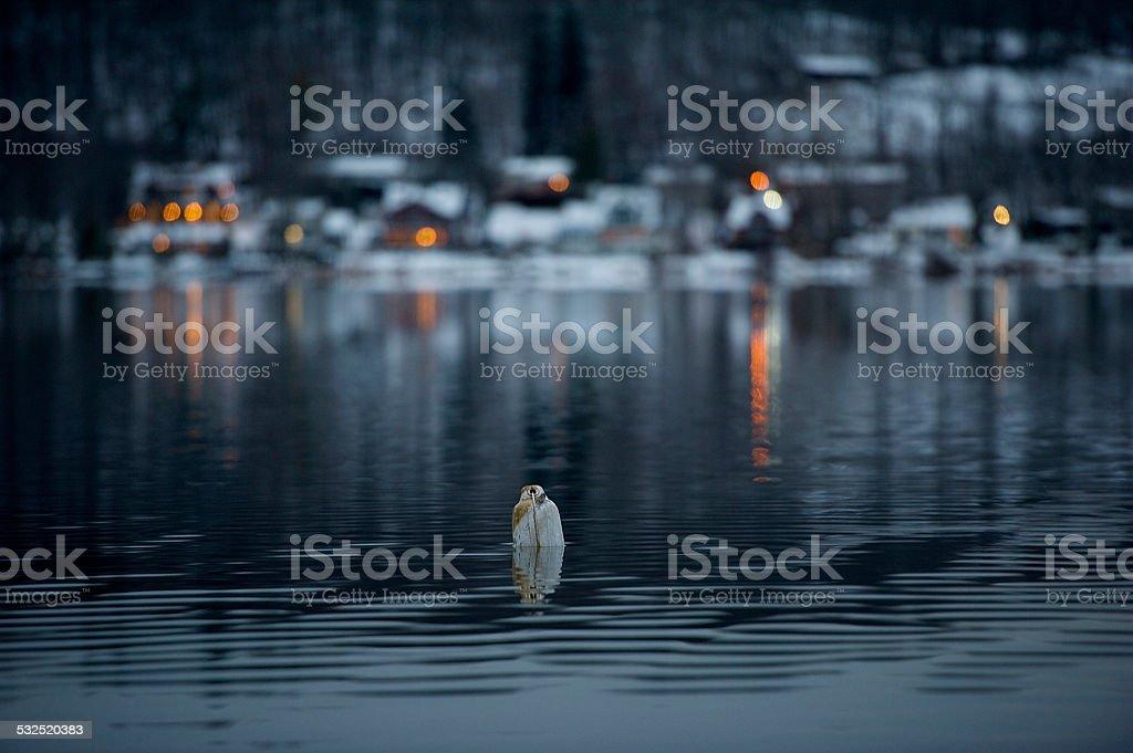 Serenity See Lake Lizenzfreies stock-foto