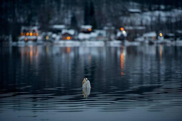 Serenity See Lake – Foto