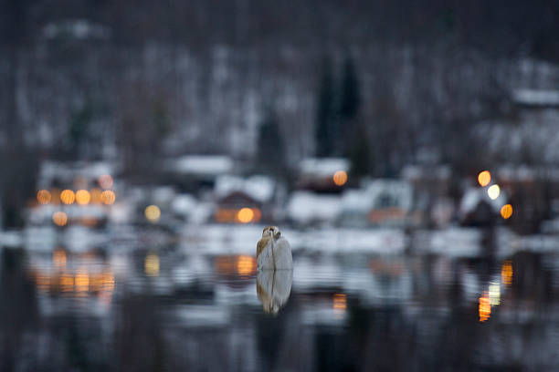 Serenity – Foto