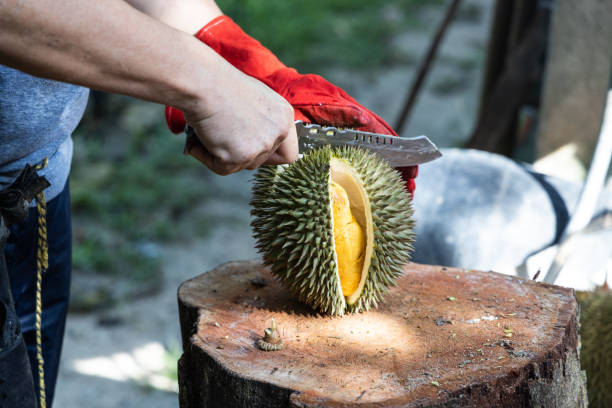 Series of person cutting open organic durian with knife stock photo
