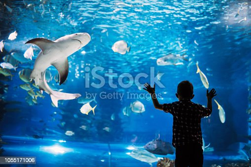 Serious boy looking in aquarium with tropical fish at ocenarium