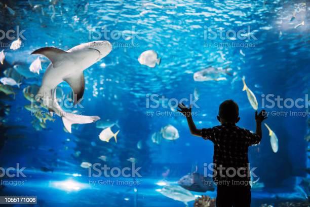 Serious boy looking in aquarium with tropical fish picture id1055171006?b=1&k=6&m=1055171006&s=612x612&h=hstem d8ijdxhzw wcnlwr14jdlj eikdlpl1gmraqc=