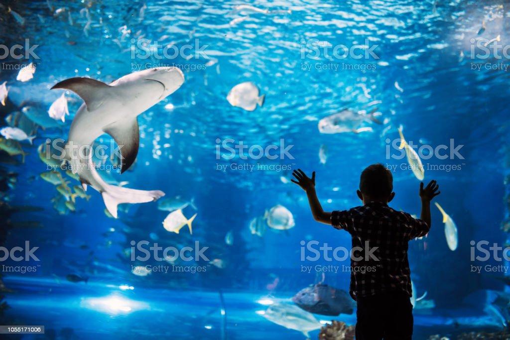 Schwere jungen suchen im Aquarium mit tropischen Fischen – Foto