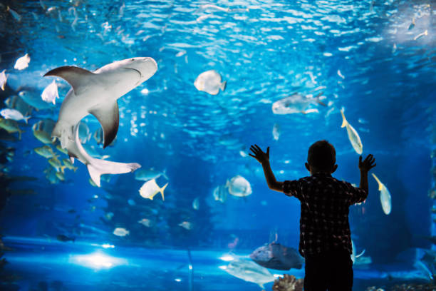 Serious boy looking in aquarium with tropical fish Serious boy looking in aquarium with tropical fish at ocenarium aquarium stock pictures, royalty-free photos & images