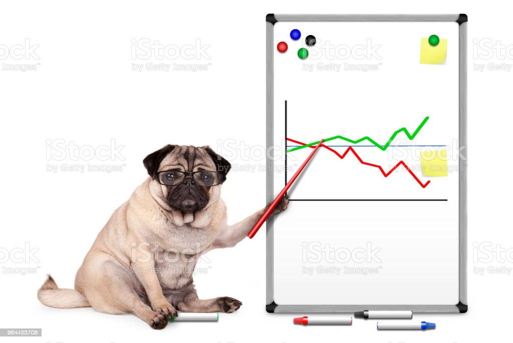 ernstige zaken pug puppy hondje zitten, wijzend op wit bord met grafiek, gele notities en magneten foto