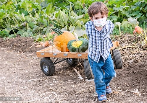 Caucasian Serious Little child boy pulling a cart with pumpkins at a pumpkin at a pumpkin patch wearing a protective face mask