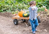 Caucasian Serious Little child boy pulling a cart with pumpkins at a pumpkin at a pumpkin patch wearing a protective face mask